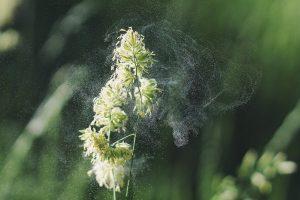 Joan Zikutara : JZ 2X13 (2021/02/20): obario polikistikoaren sindromea ulertzen, kontentzio mekanikoak aztertzen eta alergien sintomak murrizten.