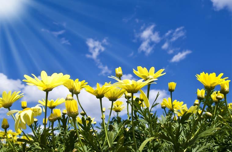 SOINUGELA: Udaberria/Spring kantuetan #ThemeTime